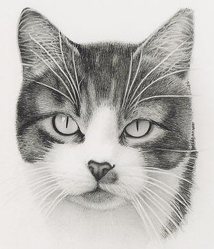 Beautiful realistic pencil portrait of a pretty cat