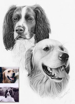 DOG PORTRAIT PENCIL.jpg
