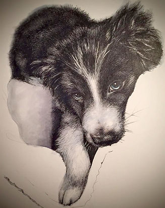 Beautiful realistic fineliner graphic pen drawing portrait of a Border Collie puppy looking hopeful!