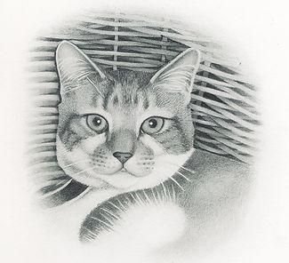 Beautiful realistic pencil portrait of a cat in a basket