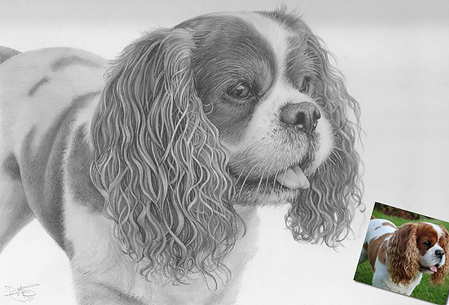 Beautiful realistic pencil portrait of a King Charles Spaniel