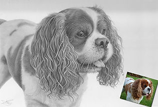Realistic pencil portrait of a King Charles spaniel dog.