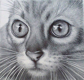 Ultra-realistic biro ballpoint pen portrait of a cat's big eyes