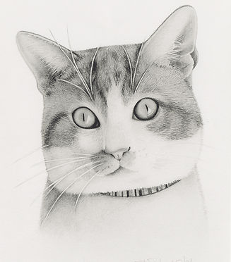 Beautiful realistic pencil portrait of a cat looking startled!