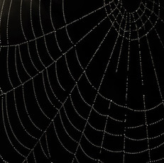 spider web_edited.jpg