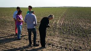 Montana lentils hitting Europe