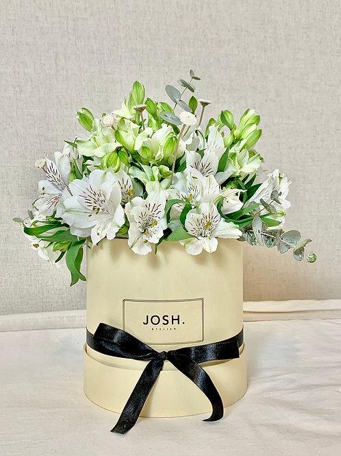 JOSH - Box de Arranjo de Flor Pequeno (Astromélias)