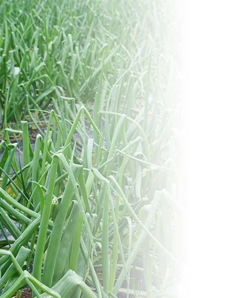畑500×600.jpg