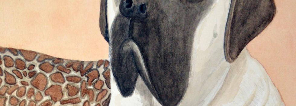lemon the bull mastiff