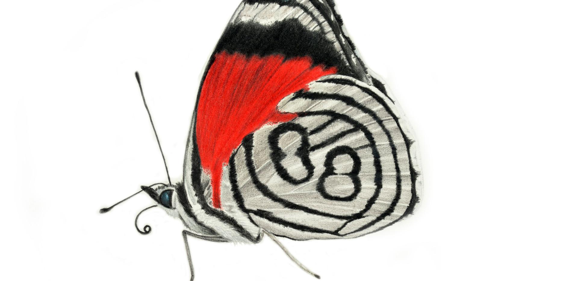 kramer's 88