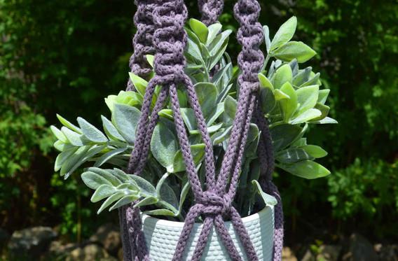 lilac plant hanger
