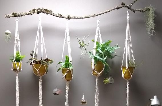 plant hanger installation