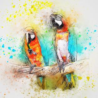 parrots pizabay.jpg