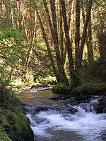restore retreat creek.jpg