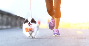 Did your dog enjoy Canine Fitness Month?