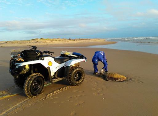 CENAS QUE INCOMODAM... animais morto nas praias!