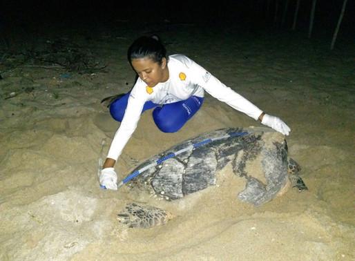 Temporada reprodutiva da tartarugas marinhas no Piauí