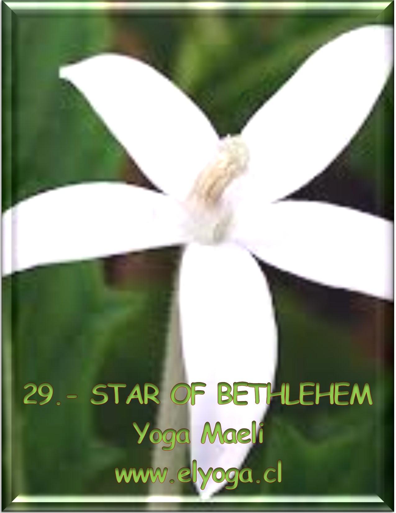 29STAROFBETHLEHEM