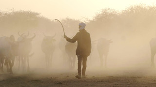 PREPAS - Supporting Herders in Chad