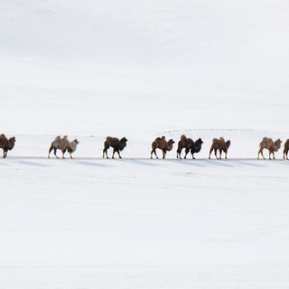 The Winter Caravan