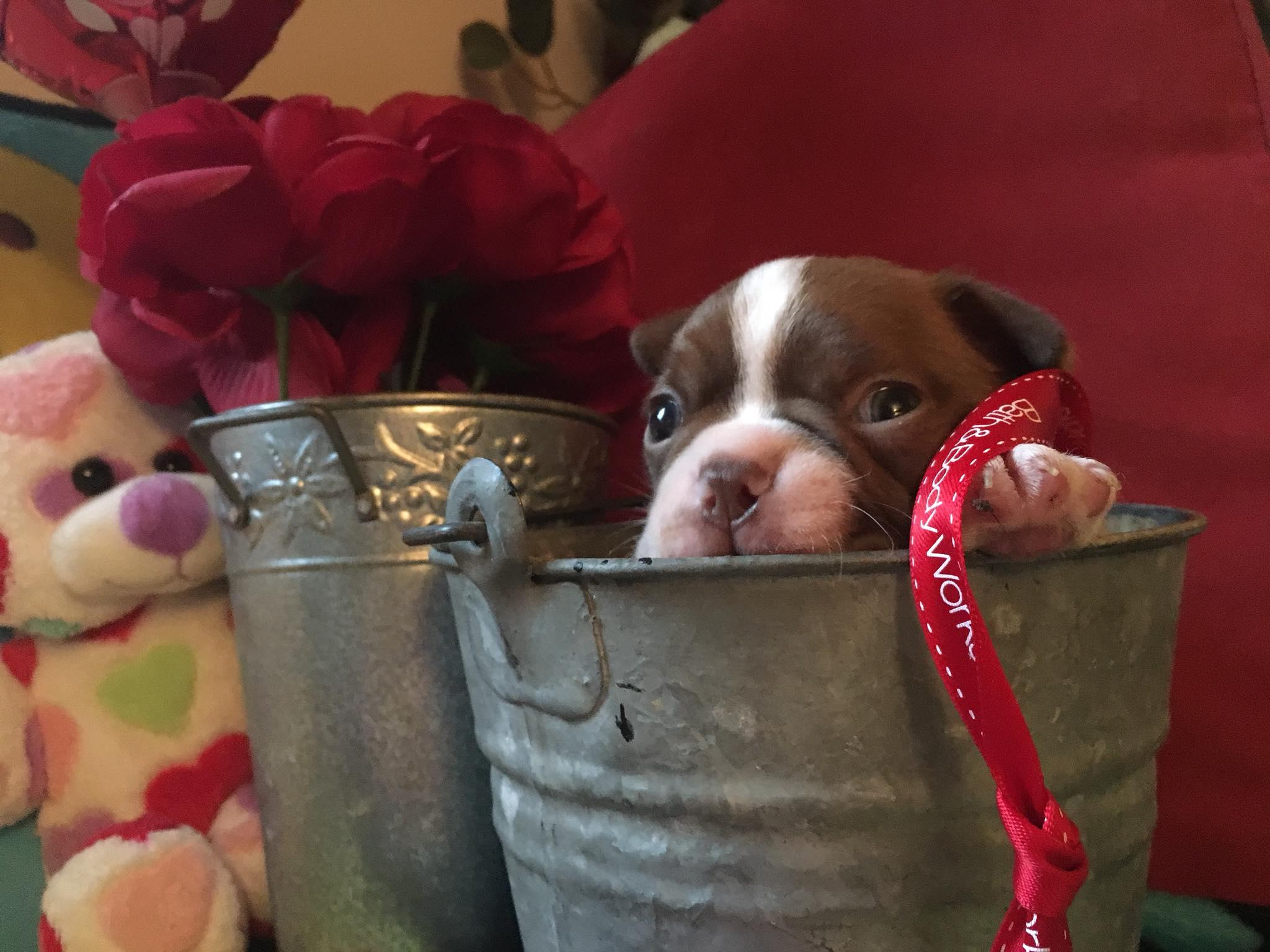 Stormy in a bucket