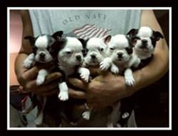 Beau and Bonnie pups
