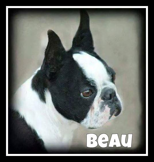 Beau Profile