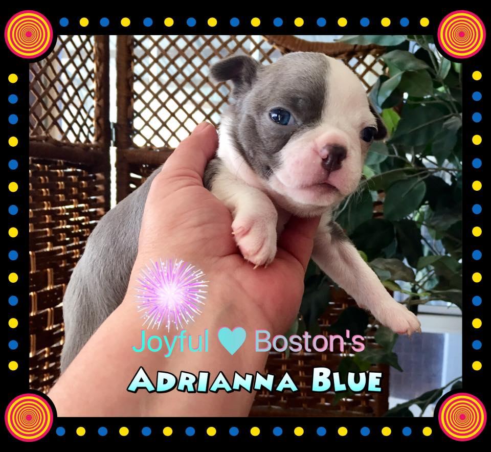 Adrianna 5 weeks old