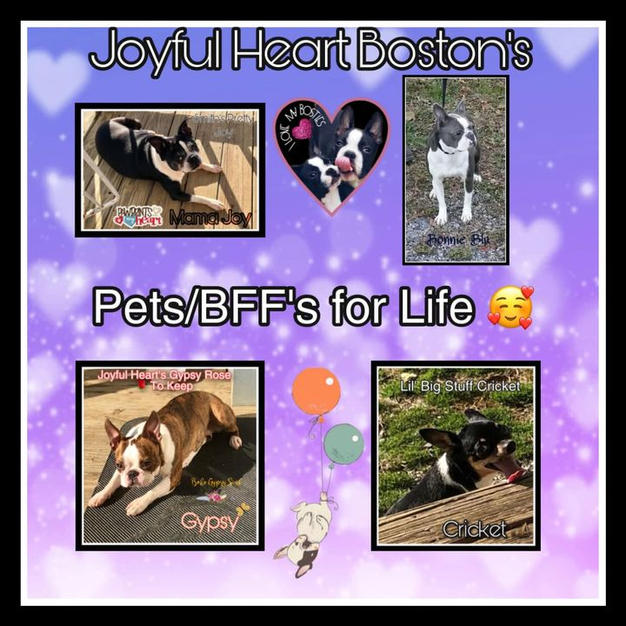 The Pets/BFF's for life