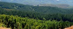 bosque-forestal