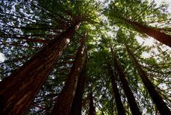 Forestal y Biomasa