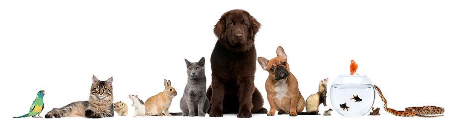 Line of exotics pets.jpg