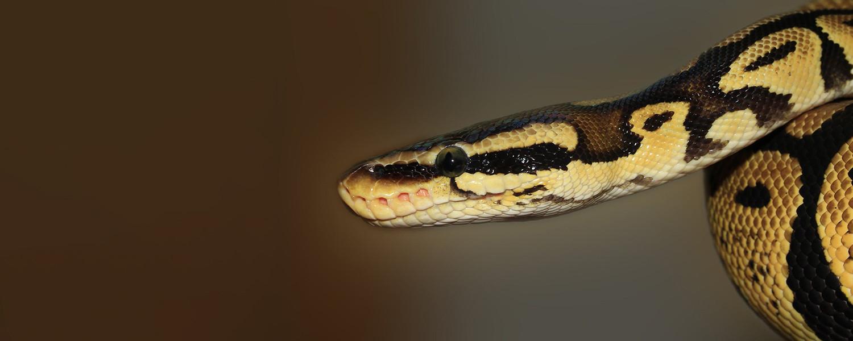 Python Home.jpg