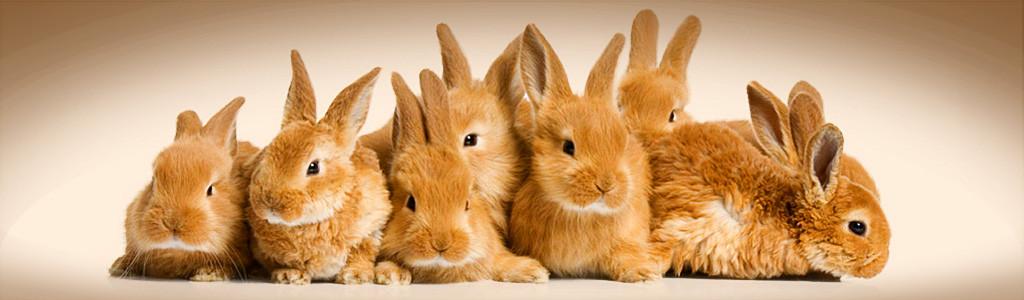 Baby bunnies Home.jpg