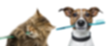 Cat and Dog Toothbrush.png