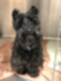 Ralphie.jpg