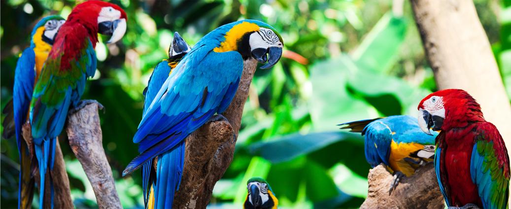 Parrots Home.png