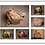 Thumbnail: Newborn 20 High Resolution Images Direct Download & Multi Aperture Frame