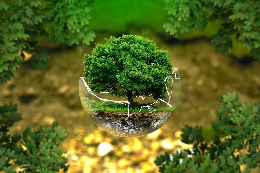 Tree inside a broken glass bowl suspended