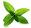 Mint%20Leaves_edited.png