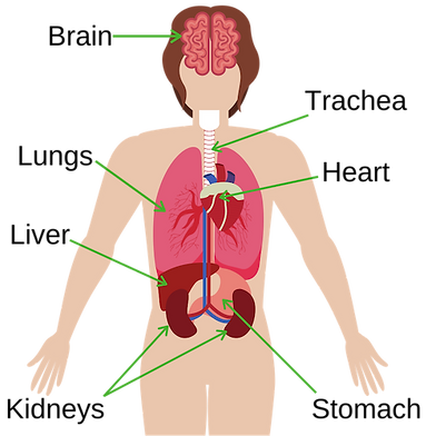 Basic Anatomy for Kids
