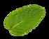 Leafe c.png