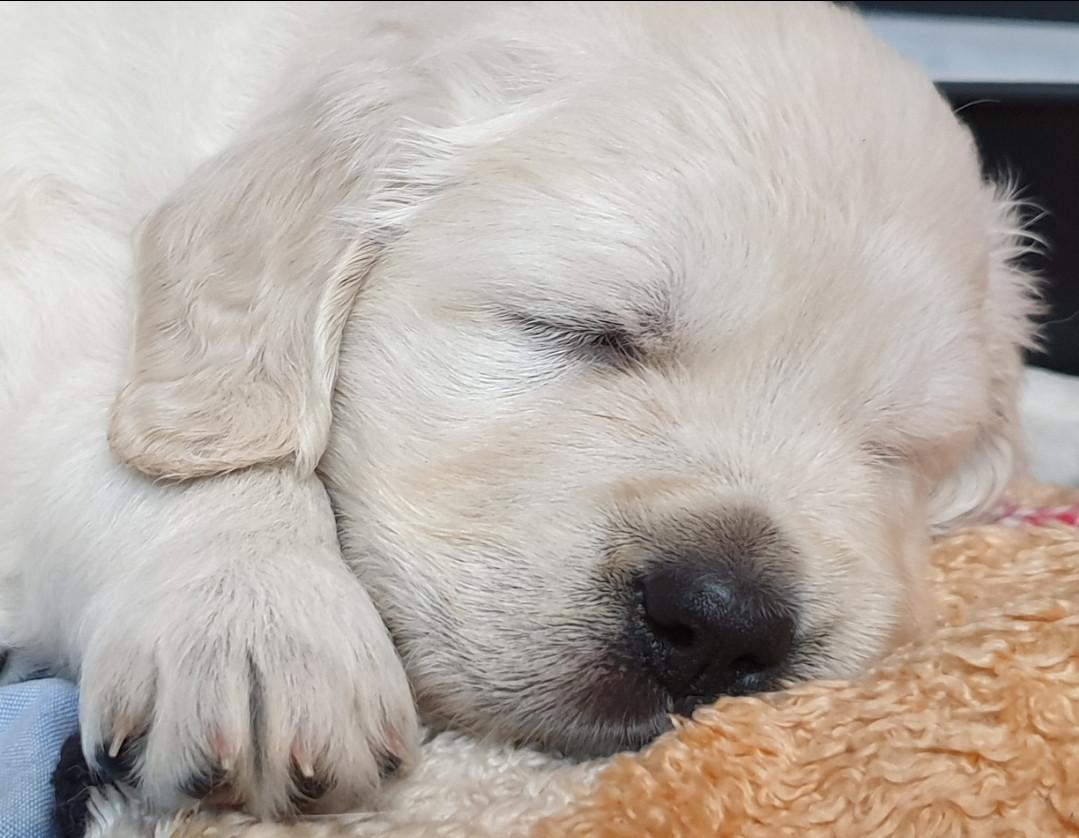 Müdes Hundekind