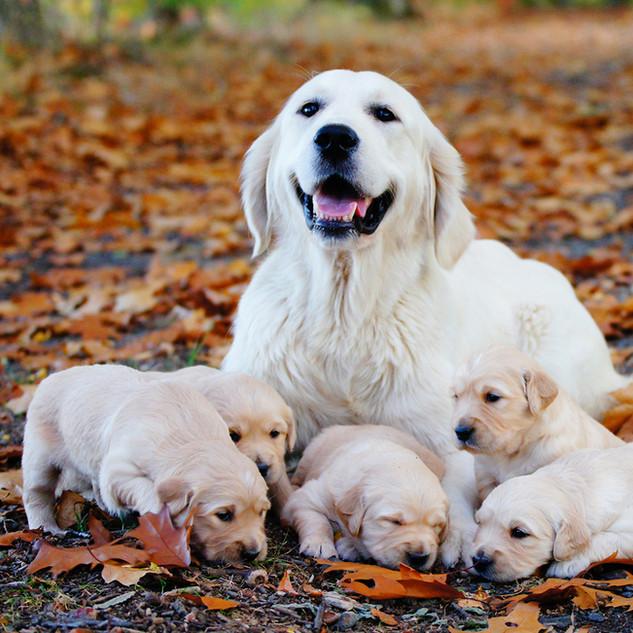 Wir alle mit unserer Mama Willow