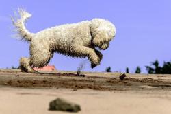 PetPal lemmikuhoidja koerte koduhoid