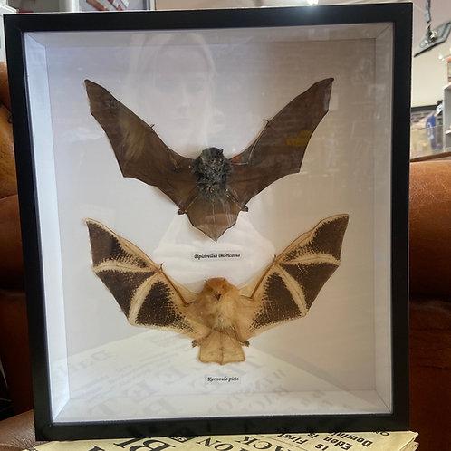 Taxidermy (Bats)