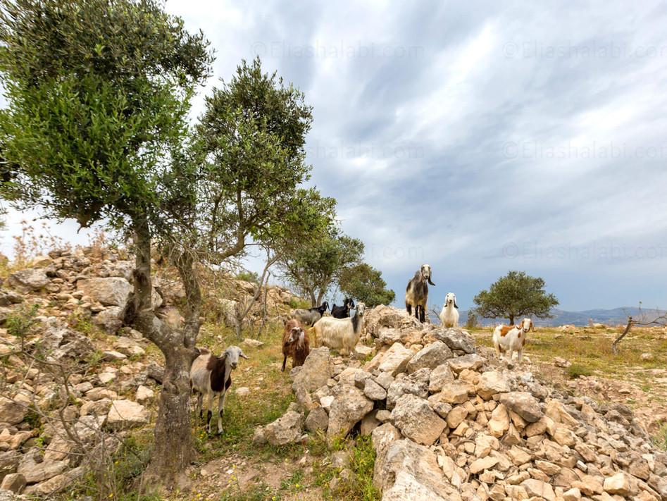 Elias Halabi - Landscape (7).jpg