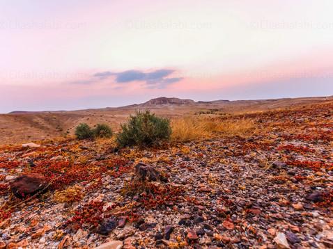 Elias Halabi - Landscape (17).jpg