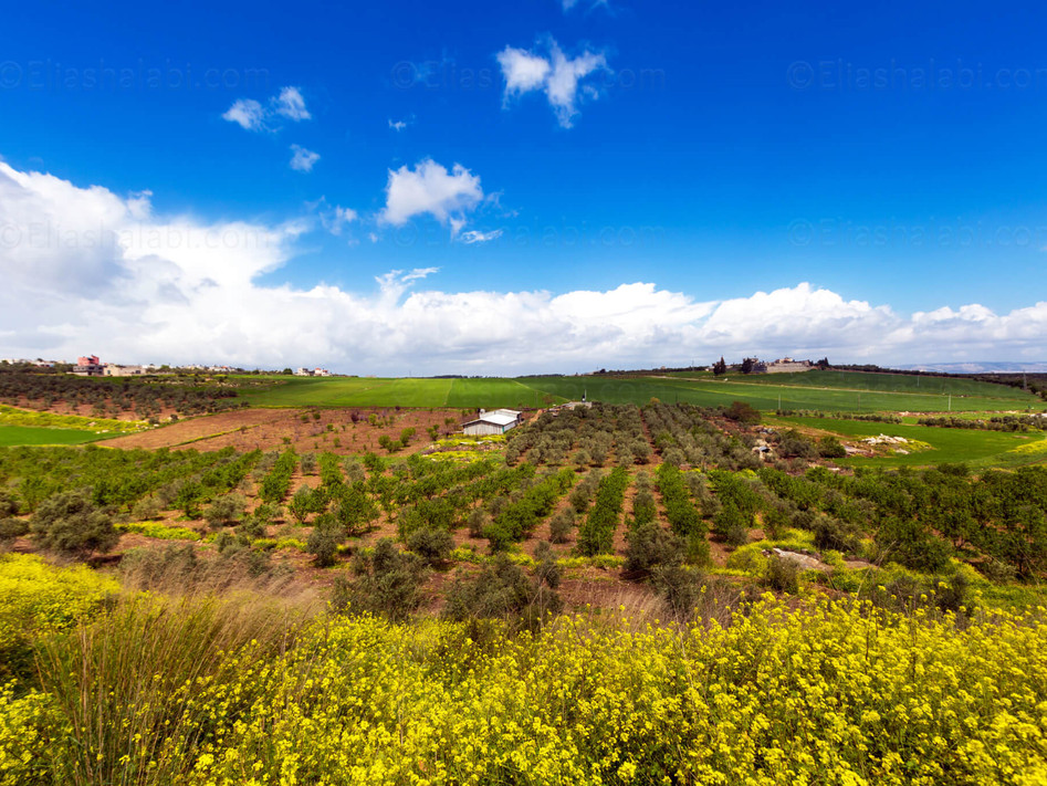 Elias Halabi - Landscape (14).jpg