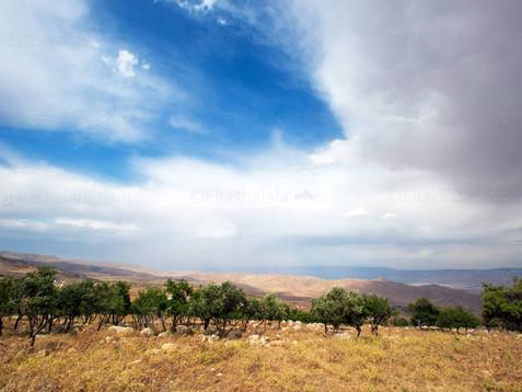 Elias Halabi - Landscape (18).jpg